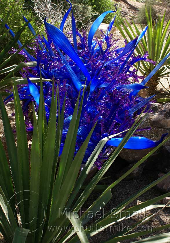 Chihuly Exhibit At The Desert Botanical Garden Shutter Mike Photography