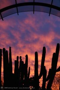 Sunset-at-Phoenix-Desert-BOtanical-Garden