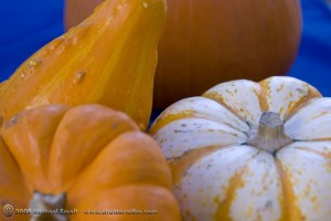 Fall gourds and pumpkins still life photograph using complimentary colors.
