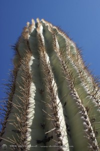 McDowell Mountain Preserve - Photo of a Giant Saguaro