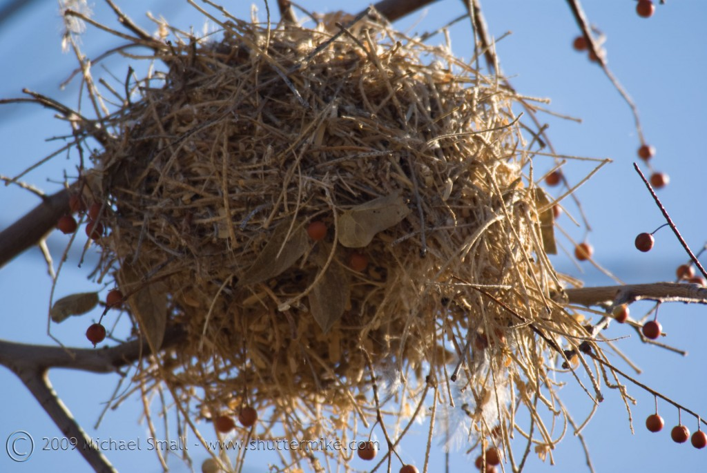 Photo Of The Day Bird S Nest Shutter Mike Photography