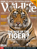 BBC Wildlife Magazine Cover with Tiger