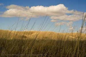 Photo of Arizona grasslands