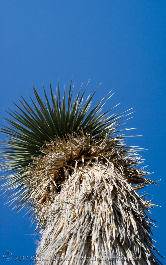 Photo of a yucca cactus against the blue sky