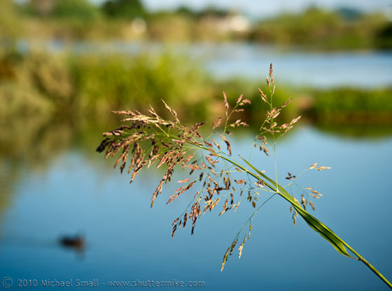 Photo of grass at the Riparian Preserve