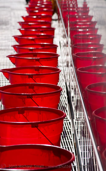 Photo of red buckets lined up in a row