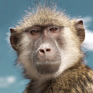 Photograph of a monkey by David Boni