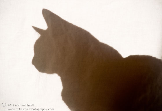 Silhouette photo of a cat.