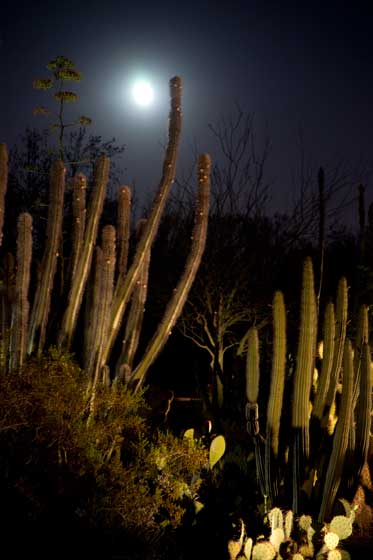 Photo of the moon rising over cactus at the Phoenix Desert Botanical Garden