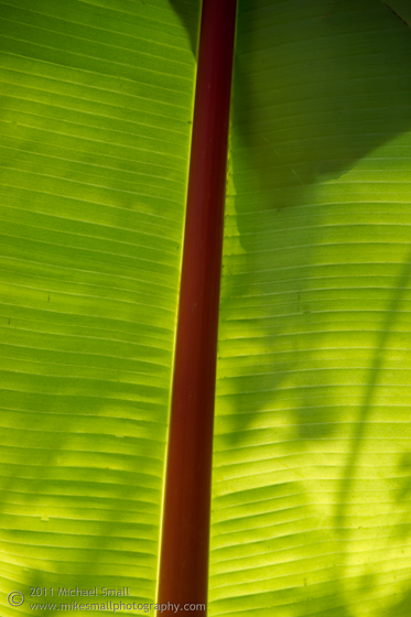 Photo of a traopical plant leaf at San Buenaventura mission in California.