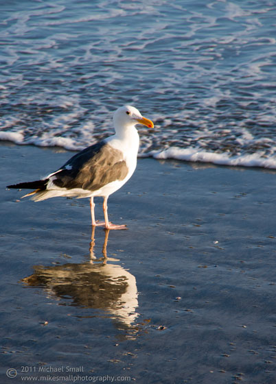 Photograph of a seagull ont eh beach in San Diego
