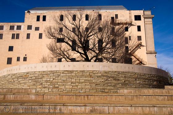 Photo of the survivor's tree at the Oklahoma City Memorial