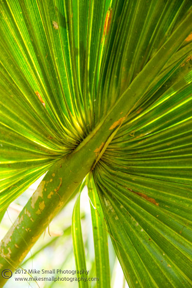 Photograph of the underside of a palm frond