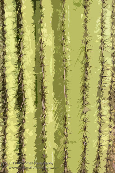 Abstract detail photograph of a saguaro cactus