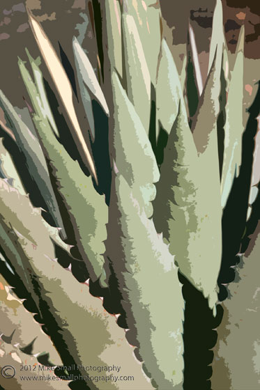Abstract photo of an agave
