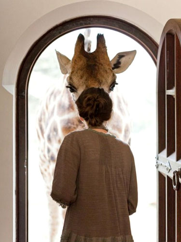 "Robin Moore's photograph ""Giraffe at the Door"""