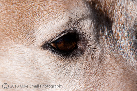 Dogs and Extension Tubes One