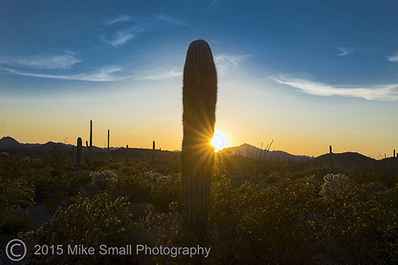 Sunset in Organ Pipe